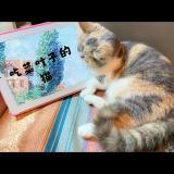 吃菜叶子的猫