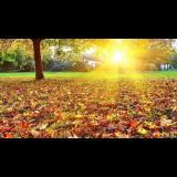 阳光森林优优13142985283