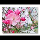 暖樱朵朵~洛洛宝🌺