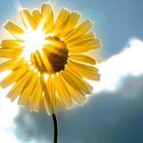 🌸因爱而生·阳光🌸